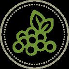 fruchtig_icon